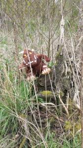 Gruffalo hunting